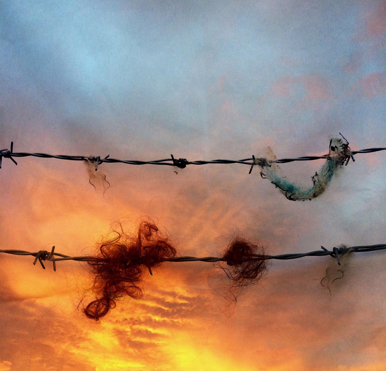 trapped hair borders future_whosenations